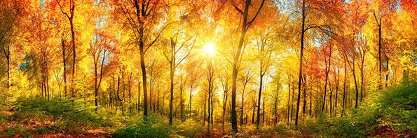 Banner herfst, lichtbericht